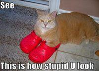 Lolcat-crocs-thumb-615x446-86738